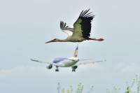 Air Moldova Animals - Aviation theme Chisinau Intl - Chisinau - (LUKK / KIV), Moldova  cn: Июнь 17, 2021  Vasili Tovtul